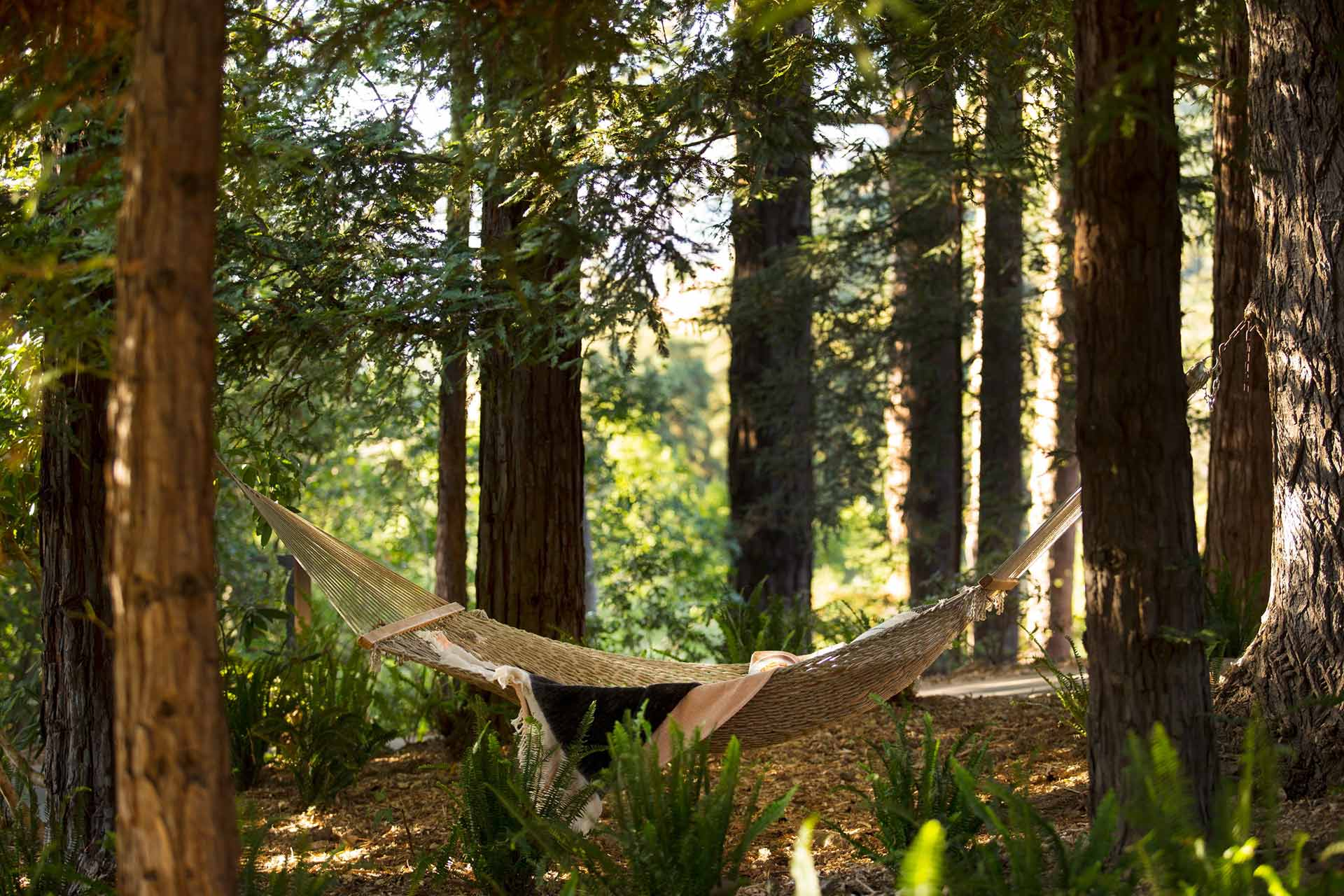 A relaxing break on the hammock amidst the trees